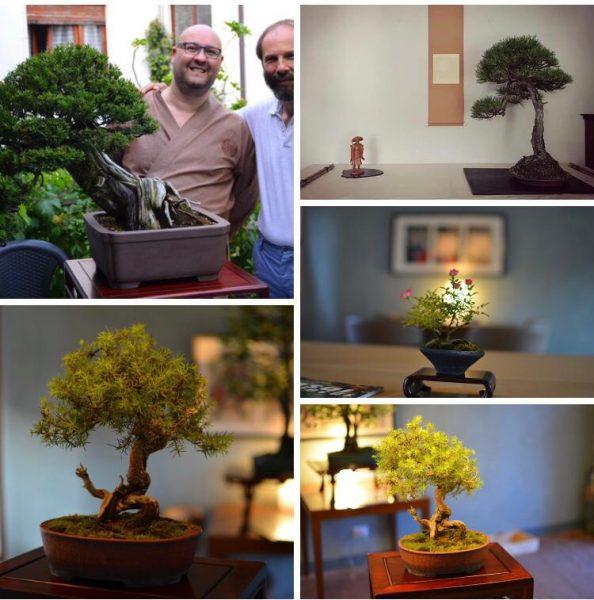 serata bonsai